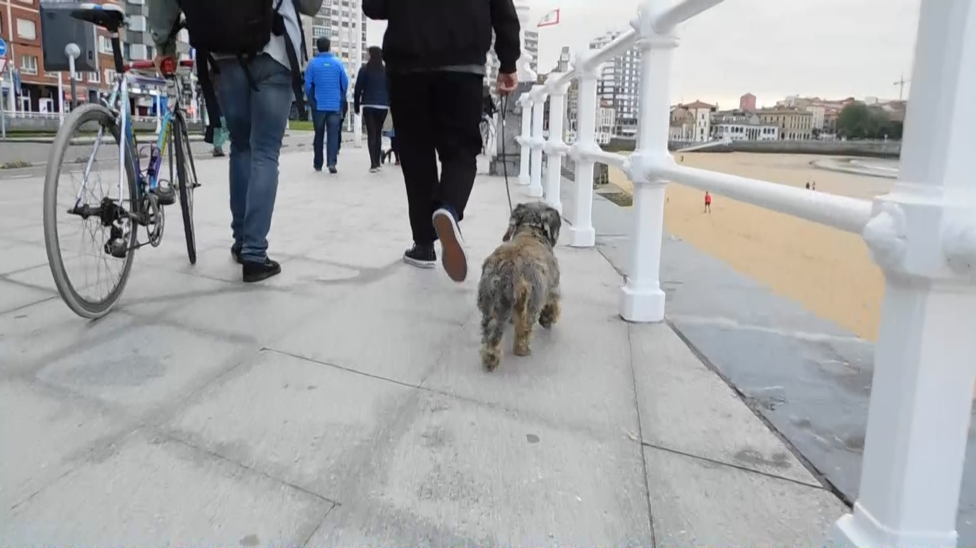 A dog walking slow next to the beach