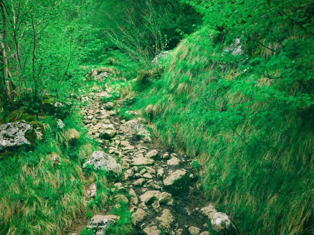 Hiking track